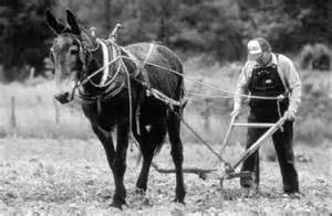 Labourer 1